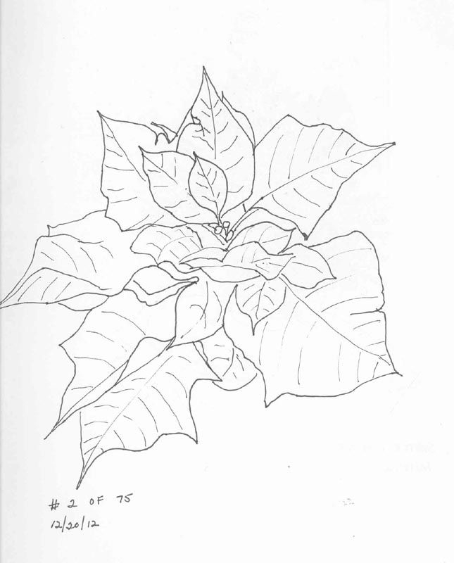 poinsettia coloring page - poinsettia picture