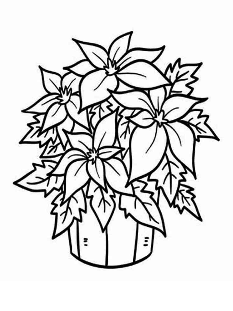poinsettia coloring page - poinsettia plant sketch templates