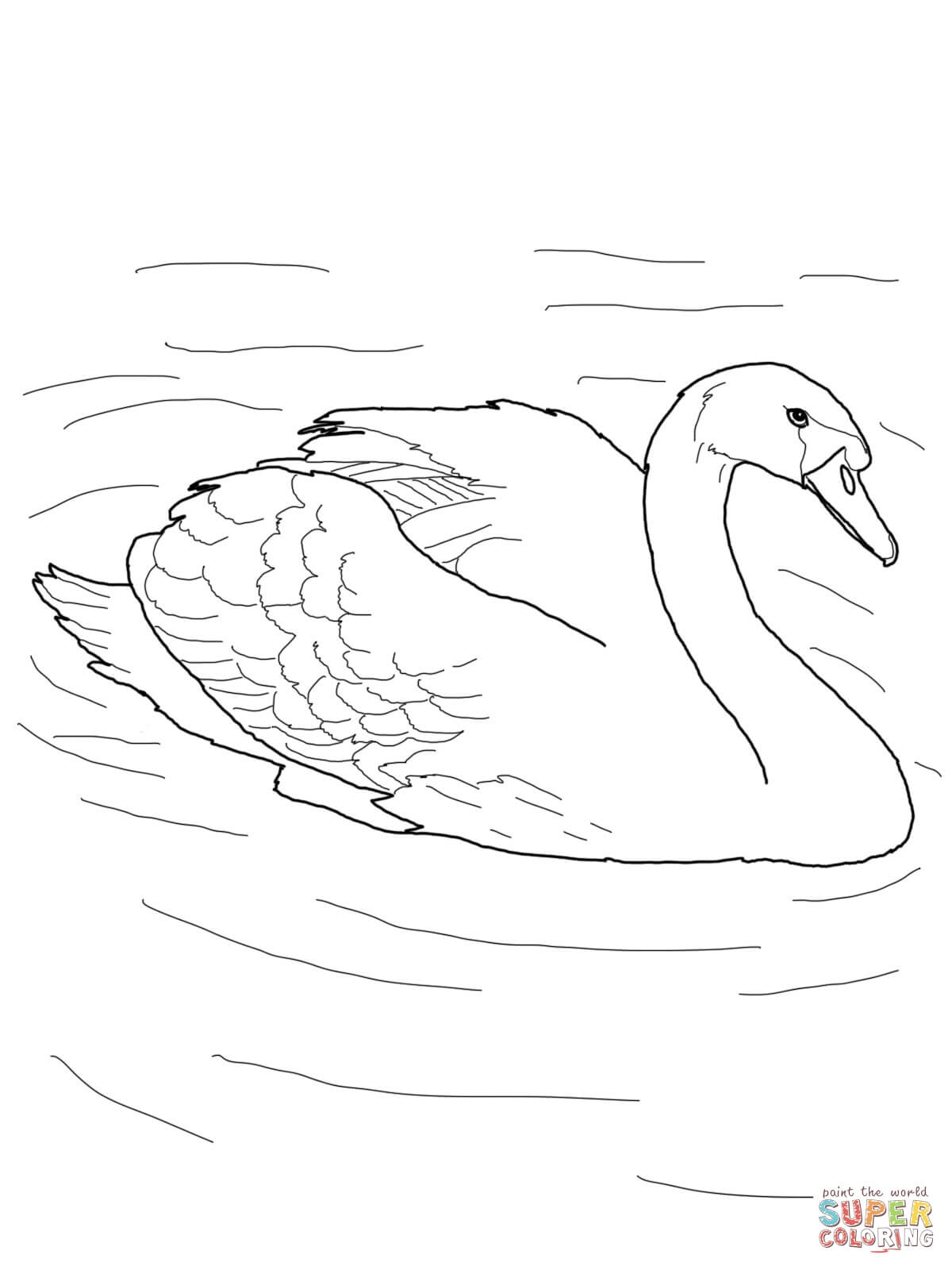 Pond Coloring Pages - Mute Swan In A Pond Coloring Line