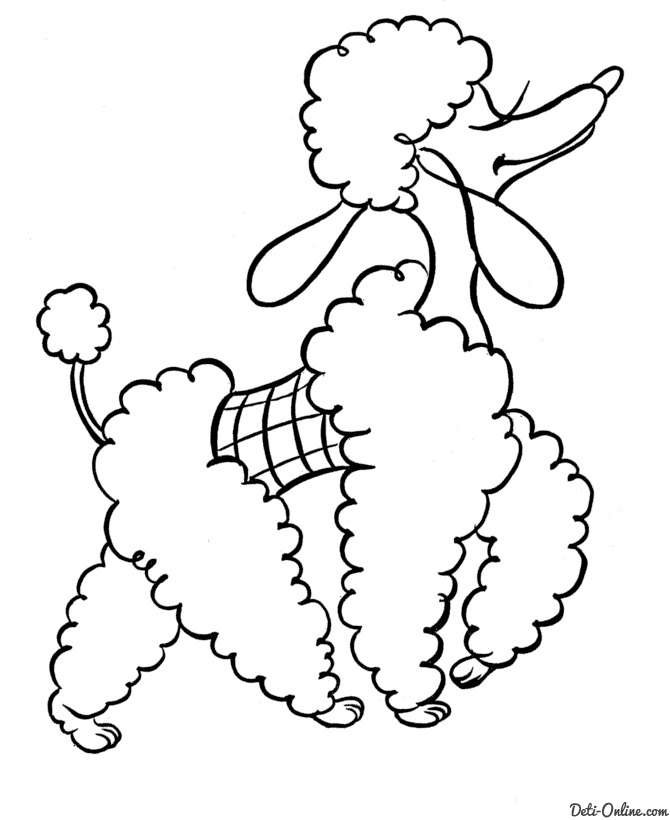 poodle coloring pages - 1476