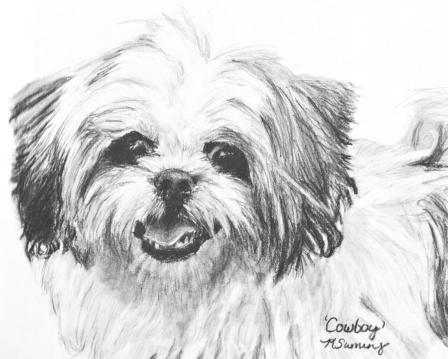 poodle coloring pages - smiling shih tzu kate sumners
