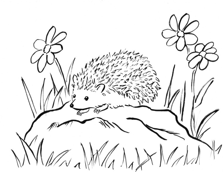 porcupine coloring page - hedgehog coloring page