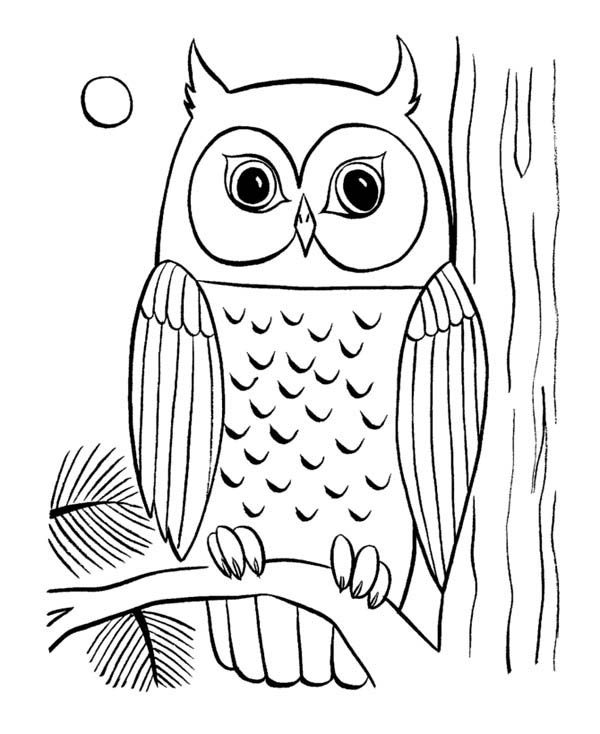 pot of gold coloring page - owl eye coloring page