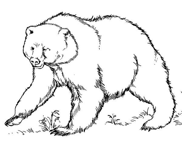 president coloring pages - brown bear coloring pages