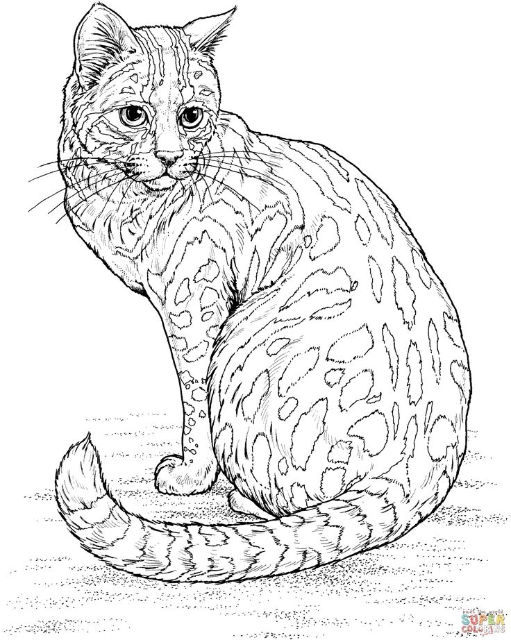 printable bird coloring pages - colouring