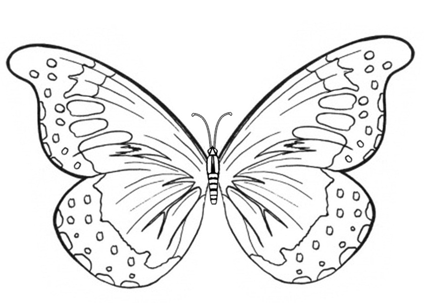 printable butterfly coloring pages - butterfly coloring pages