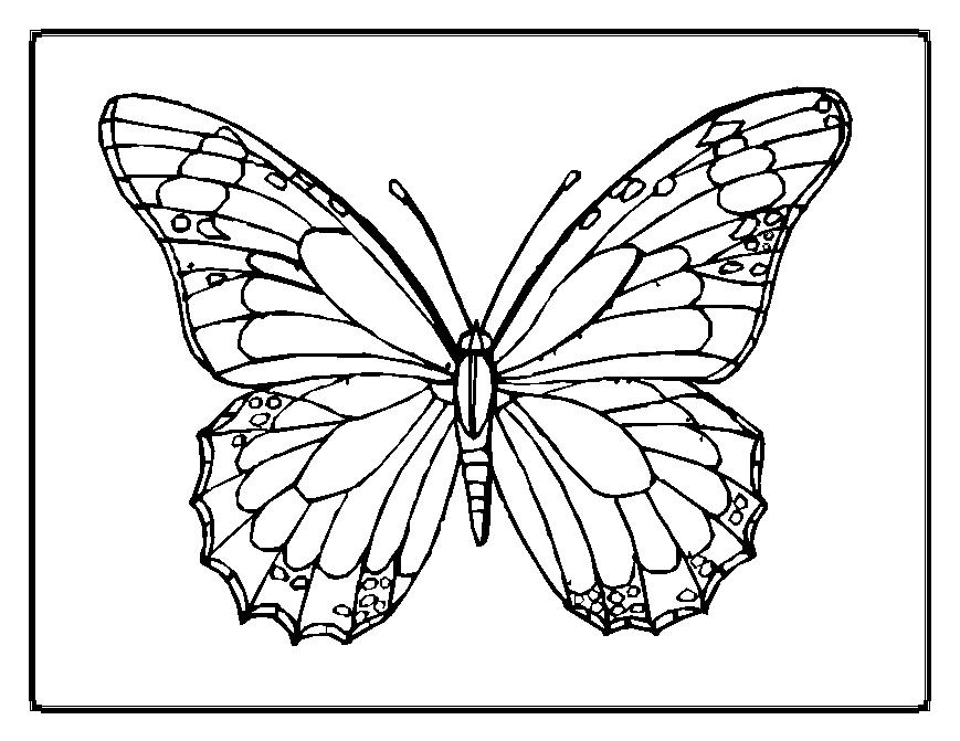 printable butterfly coloring pages - printable coloring pages of animals