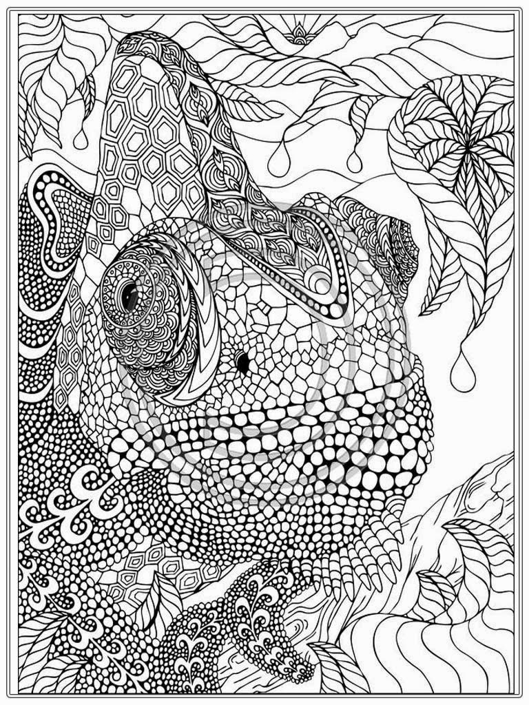printable coloring pages for adults - printable iguana adult coloring pages