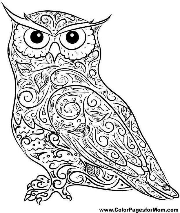 printable owl coloring pages for adults - r=adult owls