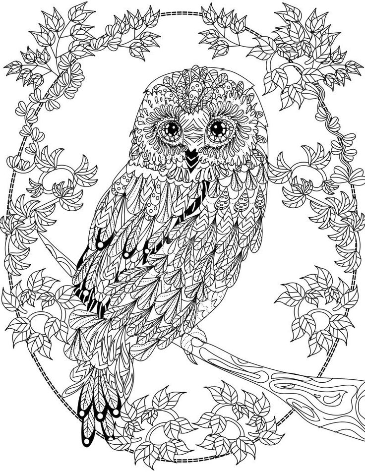 printable owl coloring pages for adults - owl coloring pages adults