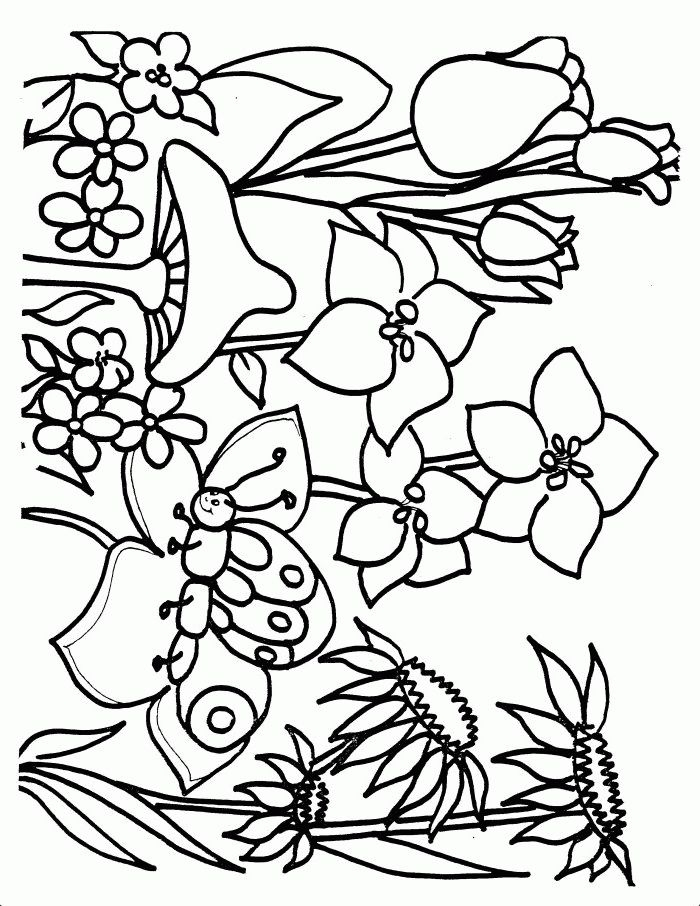 printable owl coloring pages - printable coloring sheets