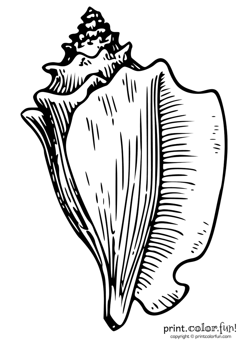 printable thanksgiving coloring pages - conch shell