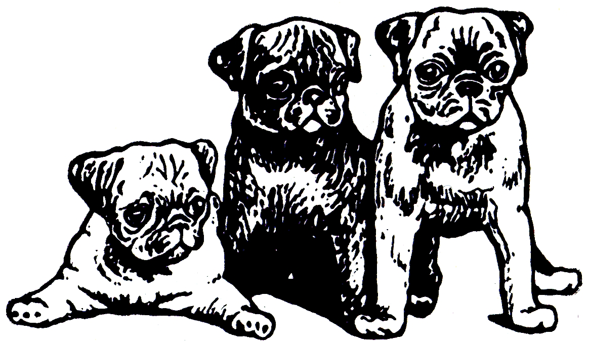 Pug Coloring Pages - Printable Pug Coloring Pages Kids Coloring