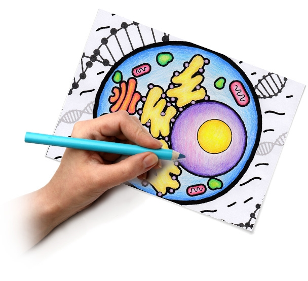 quiver coloring pages - quiver education