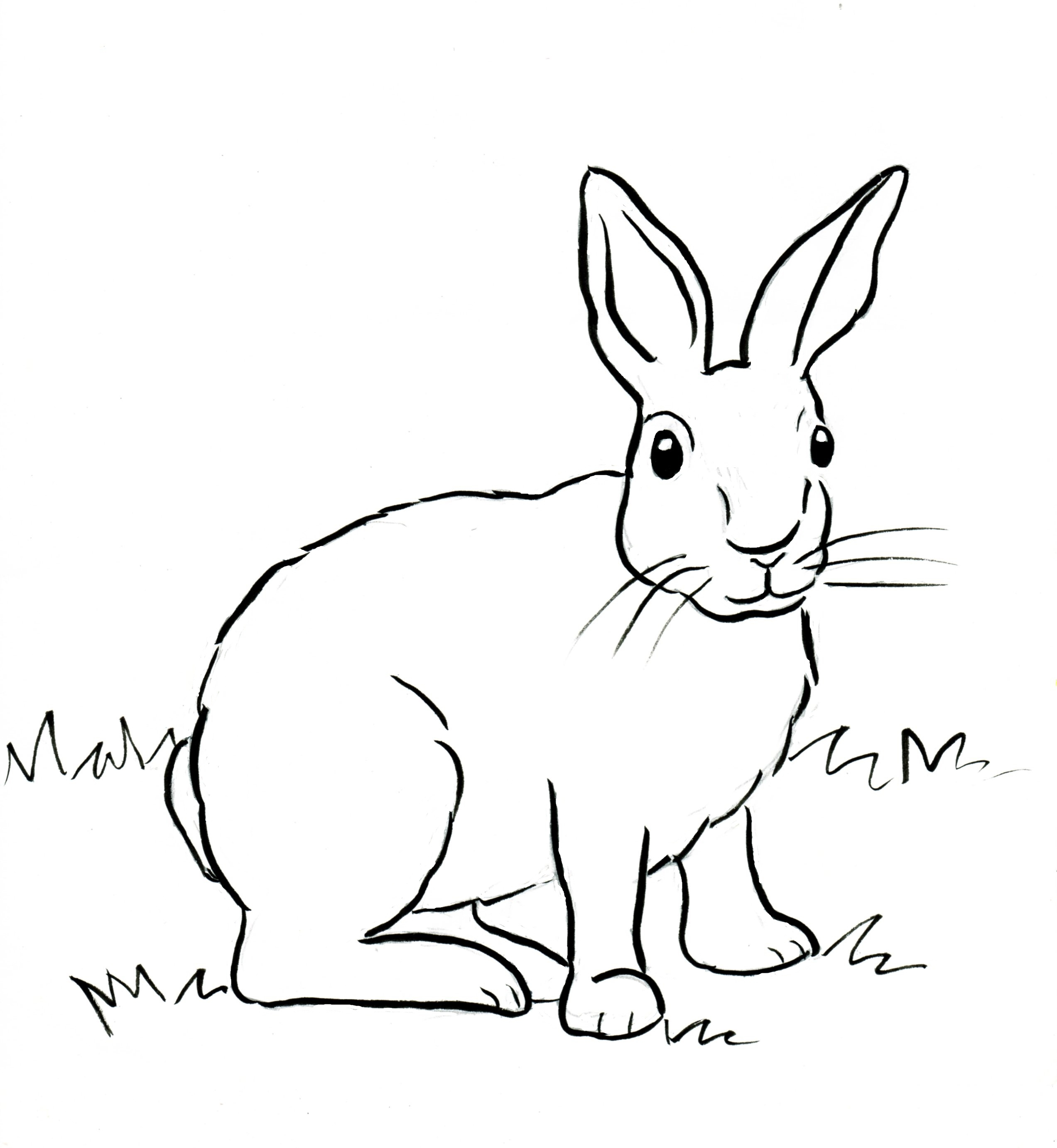 rabbit coloring pages - cottontail rabbit coloring page