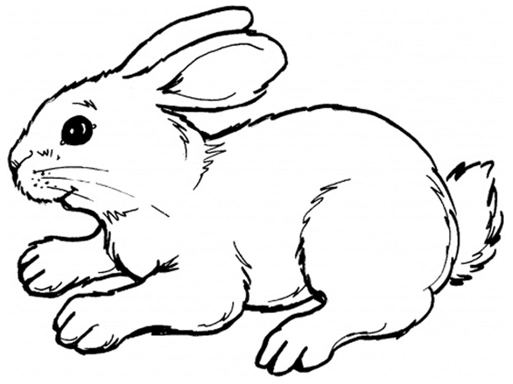 Rabbit Coloring Pages - Free Printable Rabbit Coloring Pages for Kids
