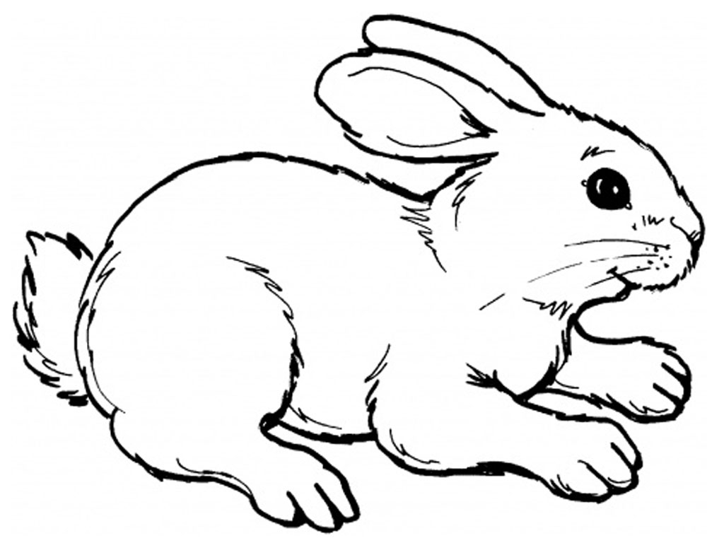 rabbit coloring pages - rabbits coloring pages realistic