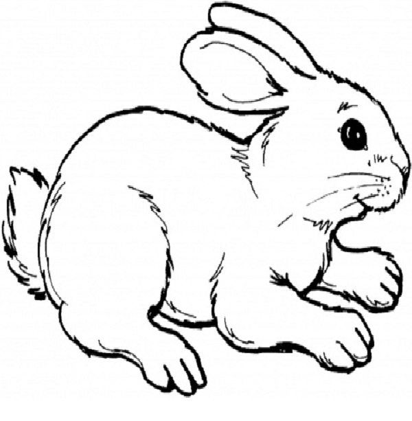 rabbit coloring pages -