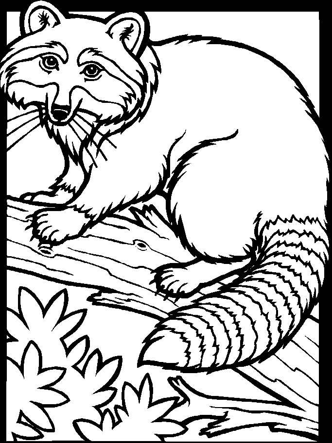 Raccoon Coloring Page - Coloriages De Animaux