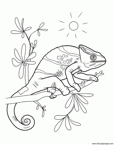rainbow brite coloring pages - 118 camaleon