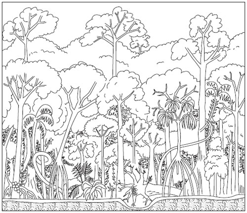 rainforest animals coloring pages - Drawn jungle tropical rainforest biome