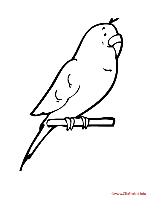 rainforest animals coloring pages - perroquet coloriage 1797