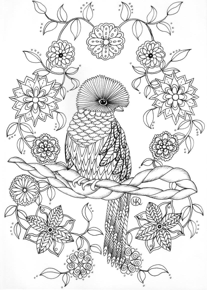 rainforest animals coloring pages - ptak