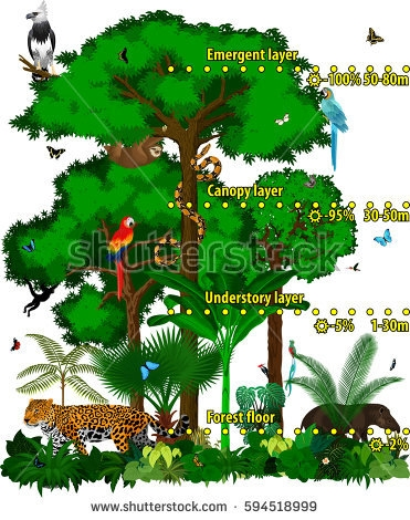 rainforest animals coloring pages - rainforest jungle layers vector illustration green