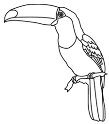 Rainforest Animals Coloring Pages - toucan Black and White Clipart Best