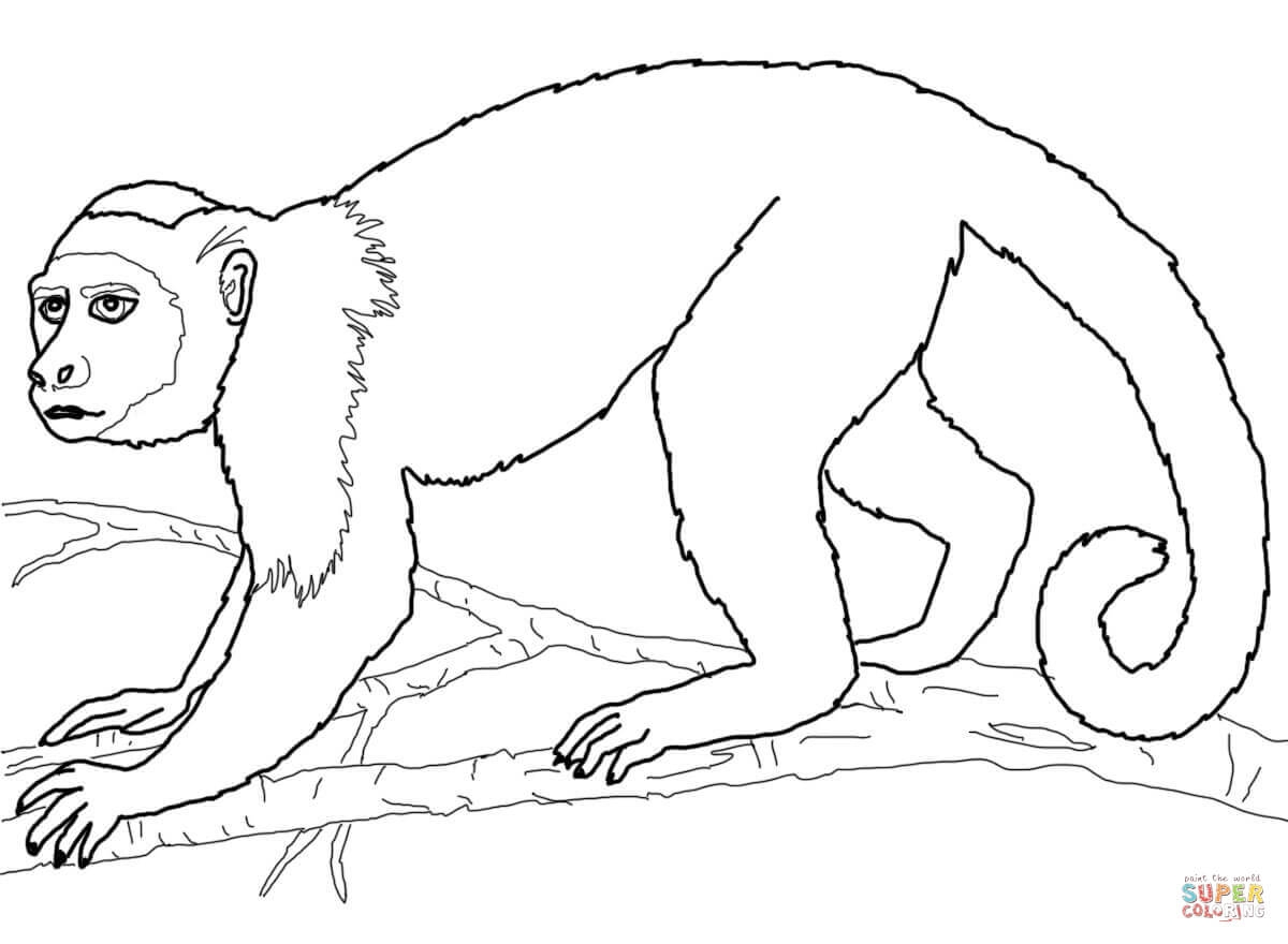 rainforest coloring pages - african rainforest animals coloring pages