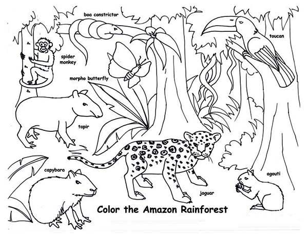 rainforest coloring pages -