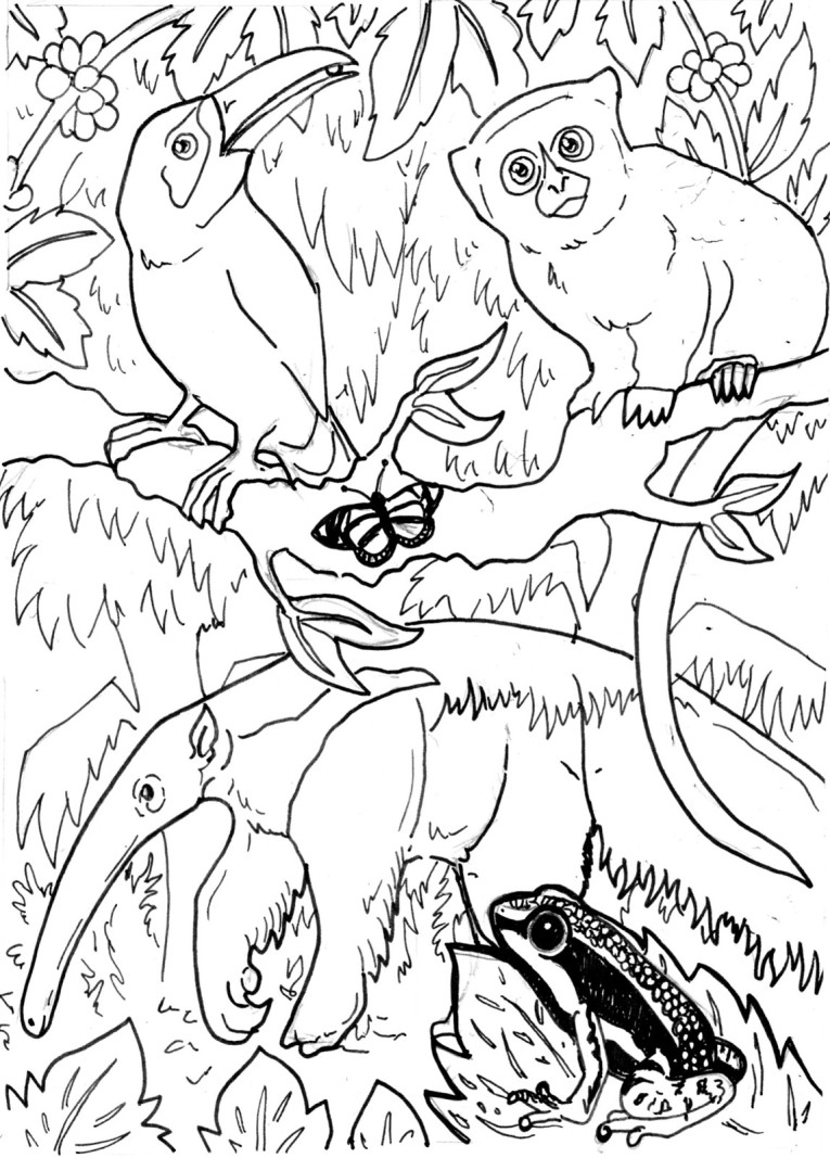 rainforest coloring pages - coloring pages of rainforest animals