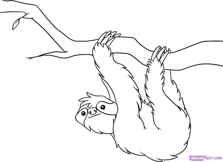 rainforest coloring pages - r=layers of rainforests