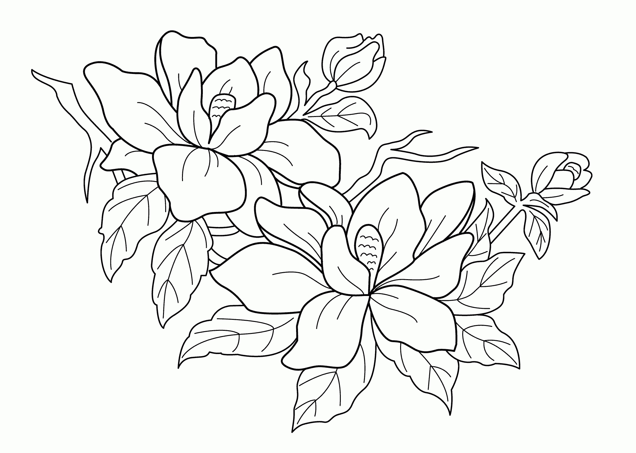rainforest coloring pages - rain forest trees coloring page