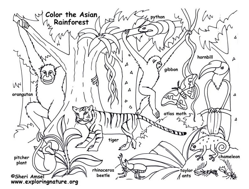 rainforest coloring pages - 2418