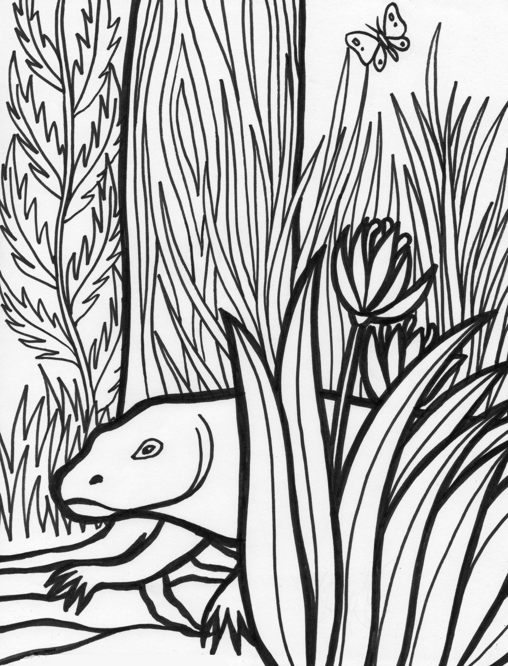 rainforest coloring pages - rainforest coloring pages endangered species coloring pages for free 5 2