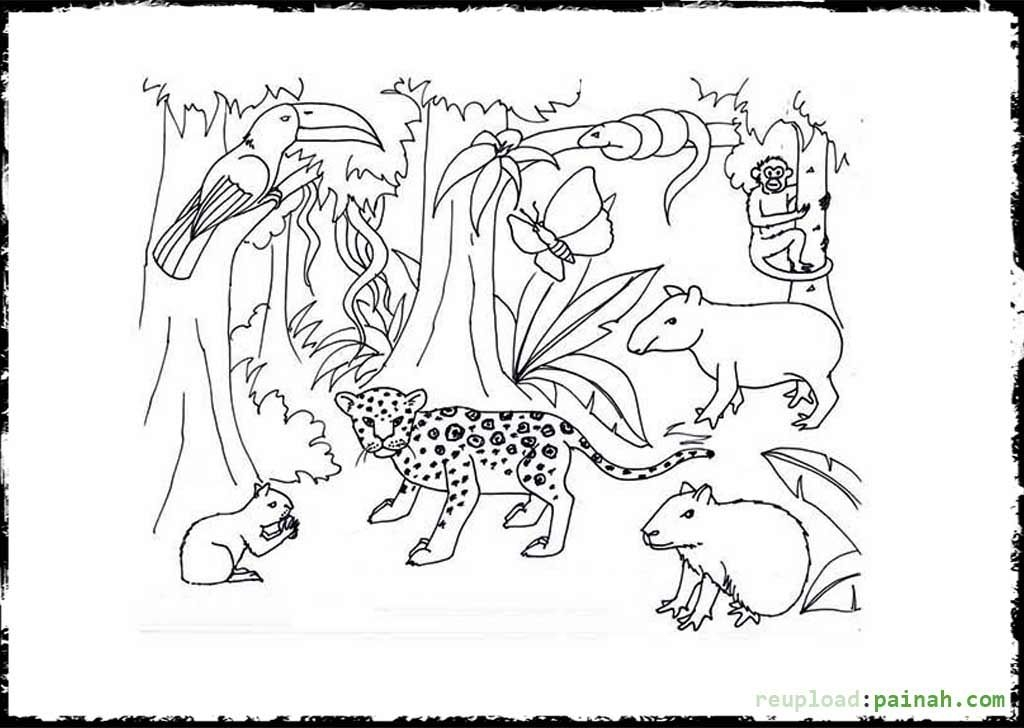 rainforest coloring pages - temperate rainforest coloring pages sketch templates