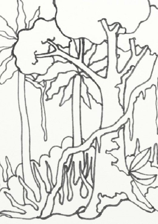 rainforest coloring pages - coloring pages