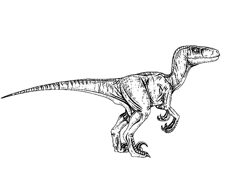 raptor coloring pages - best jurassic park coloring pages velociraptor