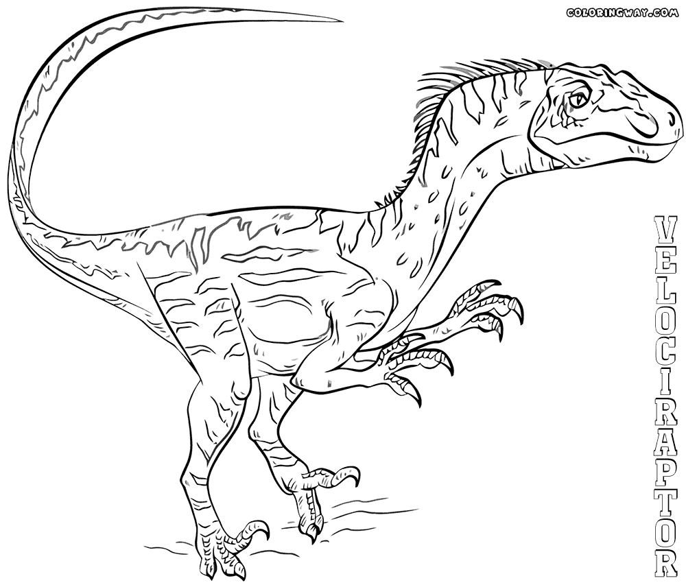 raptor coloring pages - velociraptor coloring pictures