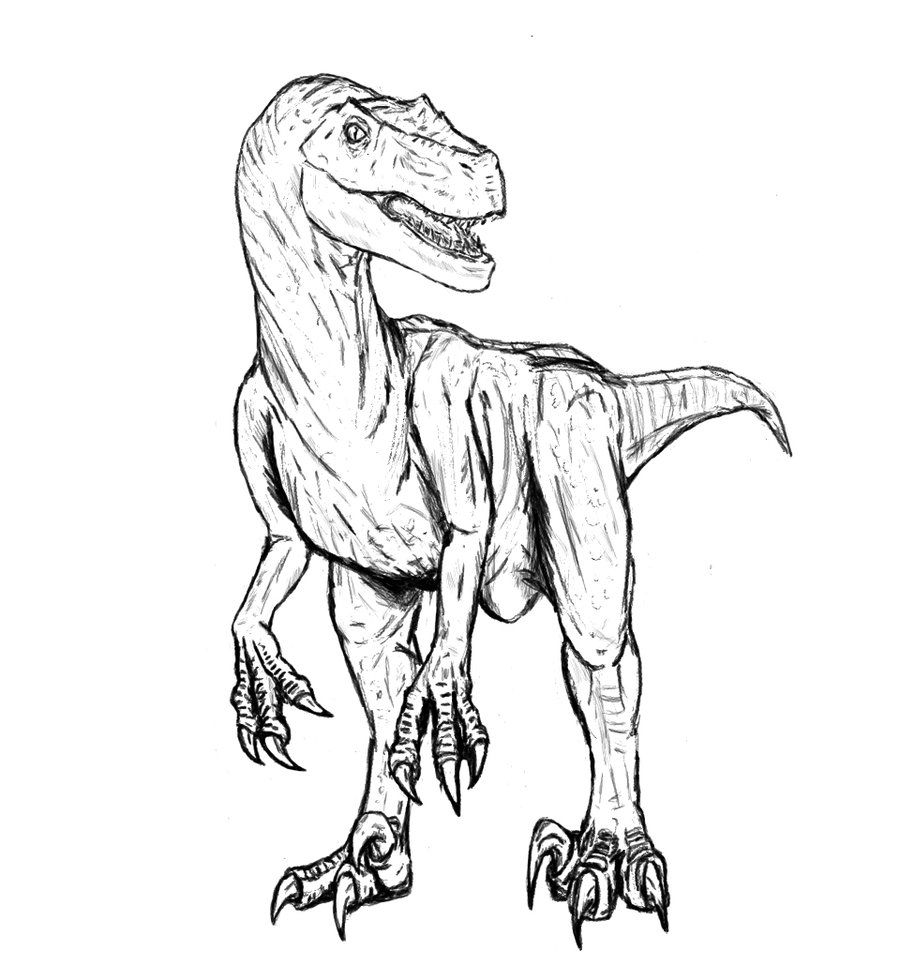 raptor coloring pages - velociraptor coloring pages