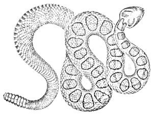 Rattlesnake Coloring Page - Snake Coloring Pages On Rattlesnake Coloring Pages