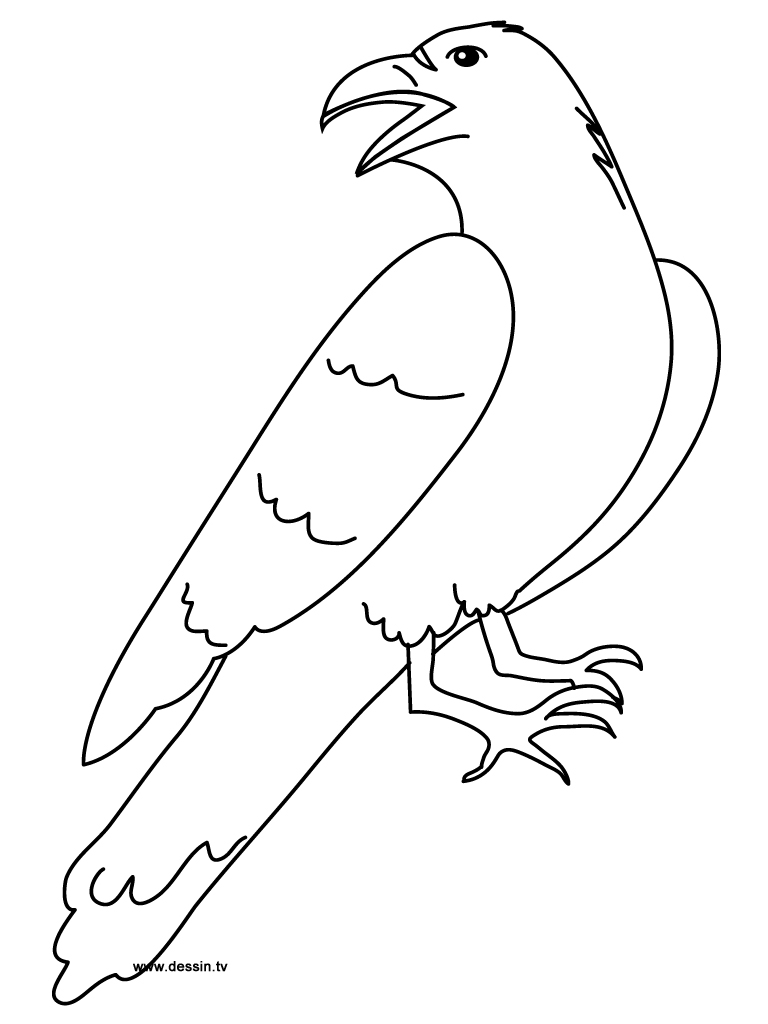 raven coloring pages - coloring raven