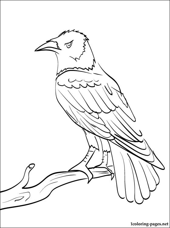 raven coloring pages - creepy raven coloring pages sketch templates