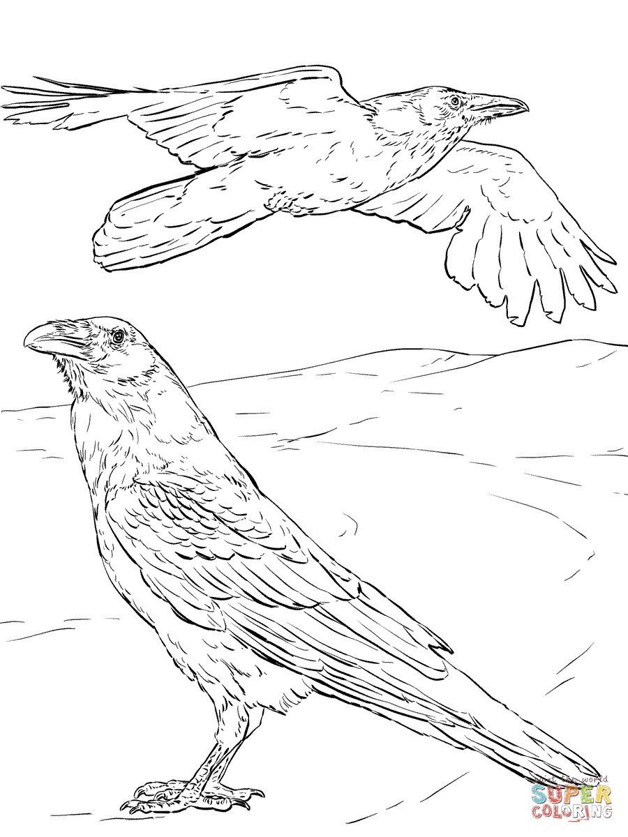 raven coloring pages - mon raven