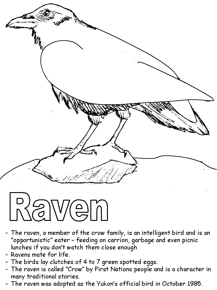 raven coloring pages - raven2