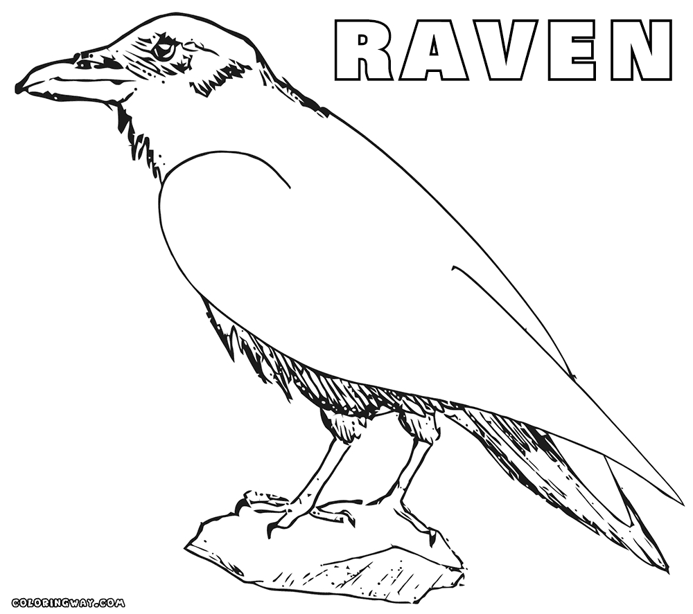 raven coloring pages - raven coloring sheets fLQ3imqK7Rdxgga2W0 MDbcwo2Af9HxRtC6JhC7i9Fg