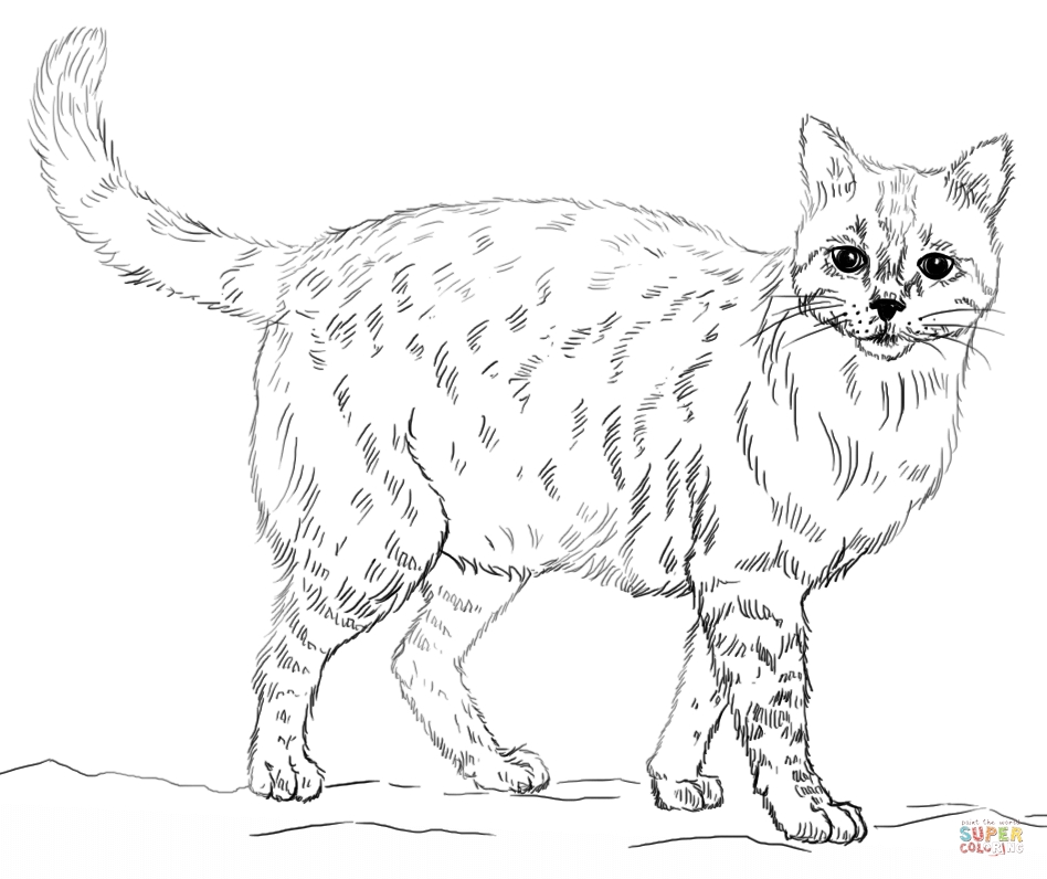 realistic cat coloring pages - realistic cat