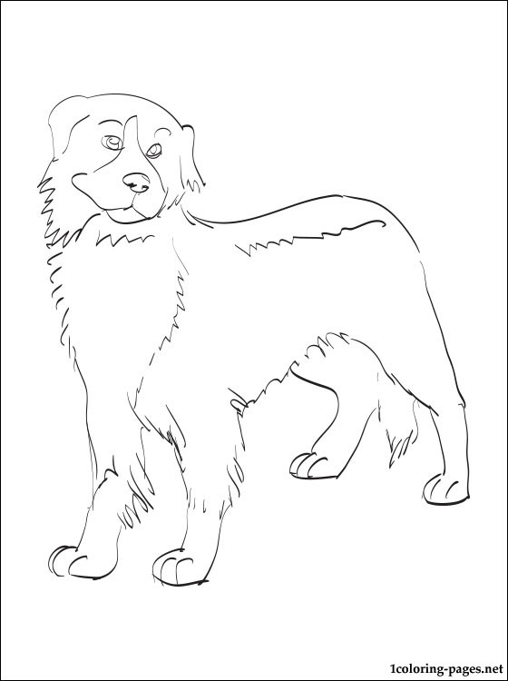religious easter coloring pages - bernese mountain dog coloring page