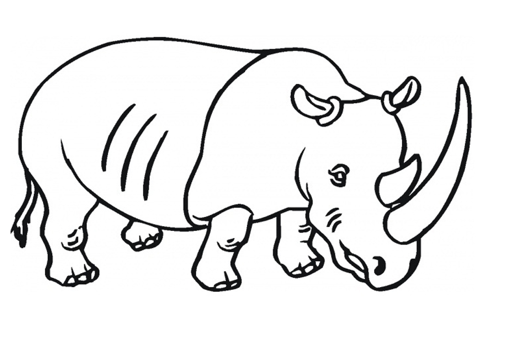 rhino coloring page - rhinoceros coloring pages